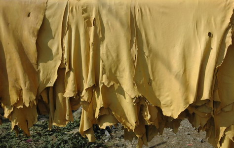 penyamakan kulit domba untuk bahan jaket