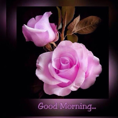 beautiful pink rose with good morning wish for whatsapp