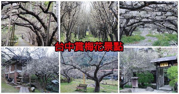台中賞梅花8處景點,除了南投以外的好選擇,持續更新
