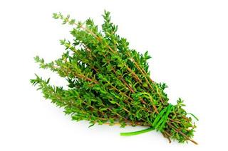 Cây cỏ xạ hương là cây gì? có tác dụng gì? sống mọc ở đâu?