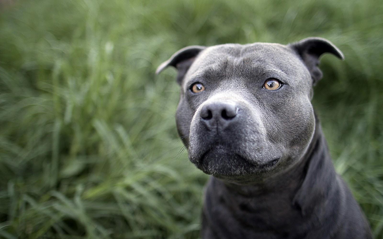 download beautiful perro de - photo #45