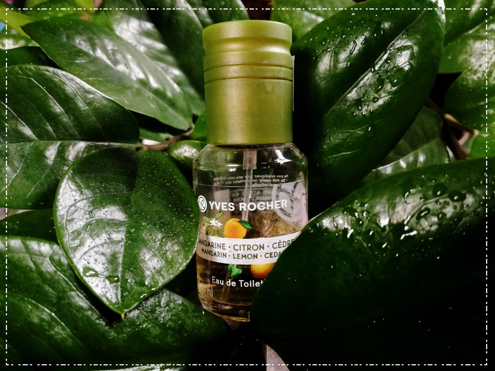 Cedr w asyście cytryny i mandarynki  czyli energetyzująca woda toaletowa Plaisirs Nature od Yves Rocher