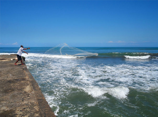 Tales Of Fishing Seafood Buko Roll And More In Aparri Cagayan