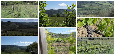 vigne montalcino sant'antimo