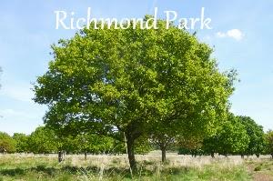 Richmond Park  A Mum in London