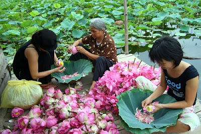 Lotus- a distinctive icon of Vietnamese culture 4