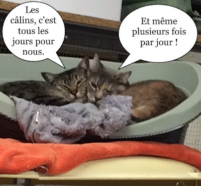 Deux chattes font un câlin.