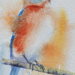 Bluebird-mini watercolor