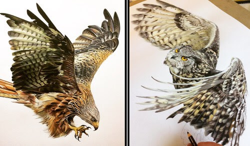 00-Tom-Strutton-Animal-Drawings-www-designstack-co