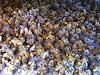 ΧΑΝΟΥΜΕ ΤΑ ΜΕΛΙΣΣΙΑ ΜΑΣ ΒΟΗΘΗΣΤΕ - ΦΩΝΗ ΑΠΟΓΝΩΣΗΣ ΑΠΟ ΟΛΟΥΣ ΤΟΥΣ ΜΕΛΙΣΣΟΚΟΜΟΥΣ
