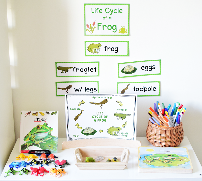 Life Cycle of a Frog Learning Activities