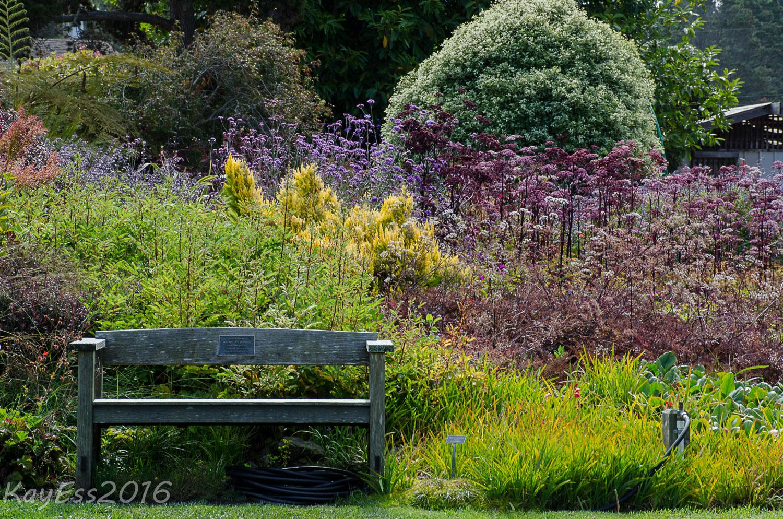 Summer at mendocino coast botanical garden - Mendocino coast botanical gardens ...