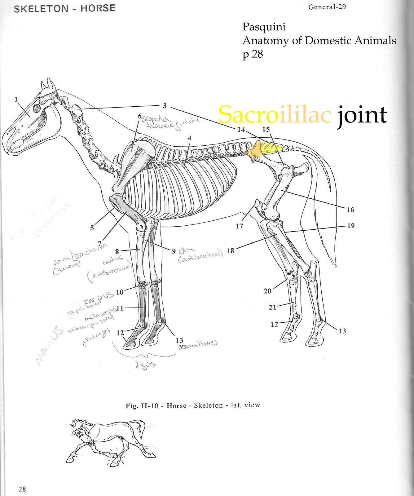 saddle joint diagram