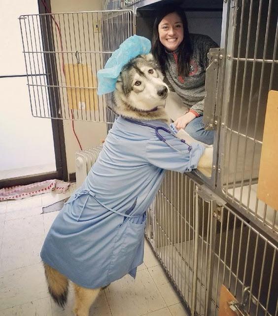 A veterinária e o cão trocaram de lugar