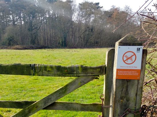 Red dog behaviour sign close to restricted areas of Gobions Wood  Image by North Mymms News released under Creative Commons