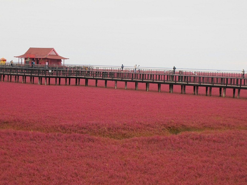 La Playa Roja en Panjin, China