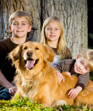 Top dog breeds for kids