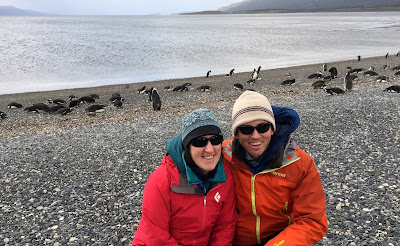Penguins in Tierra del Fuego