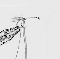 Line drawing of tying in the tail, floss and tinsel of The Professor fly.