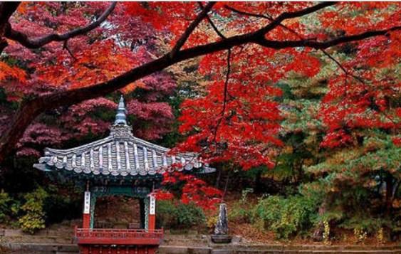 Lima Negara Dengan Wisata Musim Gugurnya Yang Terbaik di Dunia