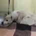 Под Харьковом собаке поездом отрезало лапу
