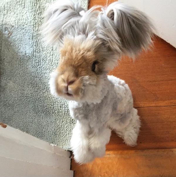 """Phát cuồng vì chú thỏ điệu đà được """"buộc tóc hai bên"""""""