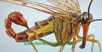 10 serangga paling mematikan
