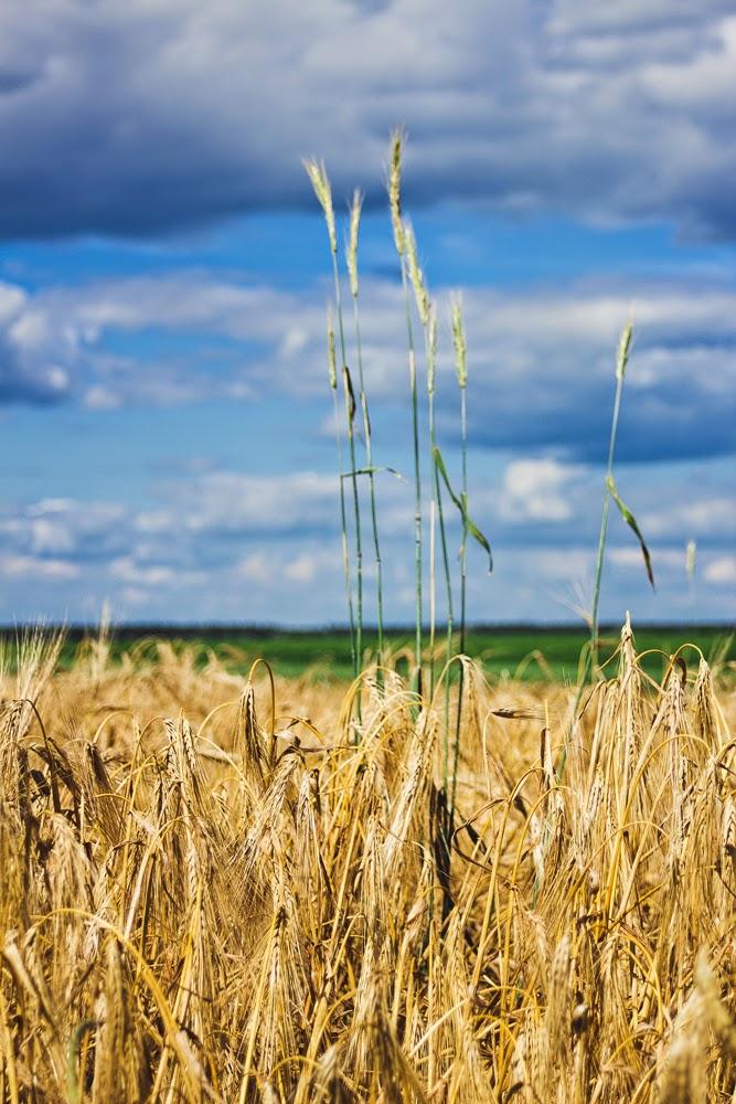 Ukraine field summer village Ukrainian
