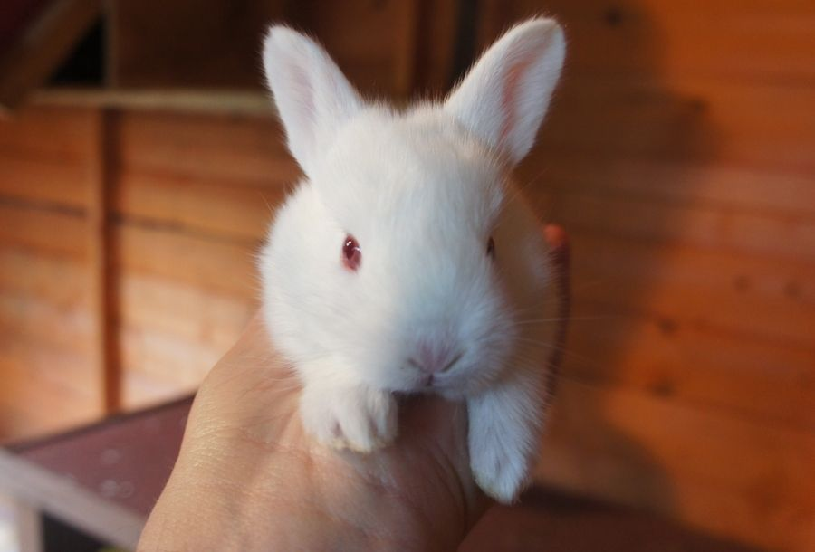9. Baby Albino Rabbit by Kimberley Garwood