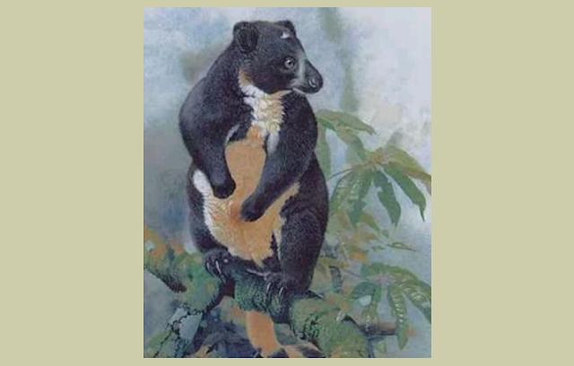 Dendrilagus Mbaiso