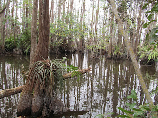 Florida Everglades Slough Slog