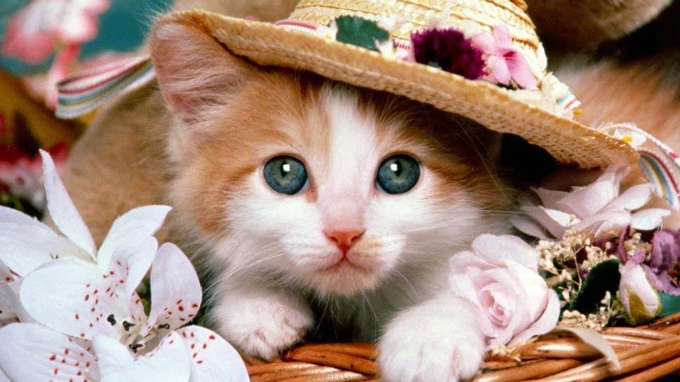 cat-easter-ready-flowers-pretty-wallpaper