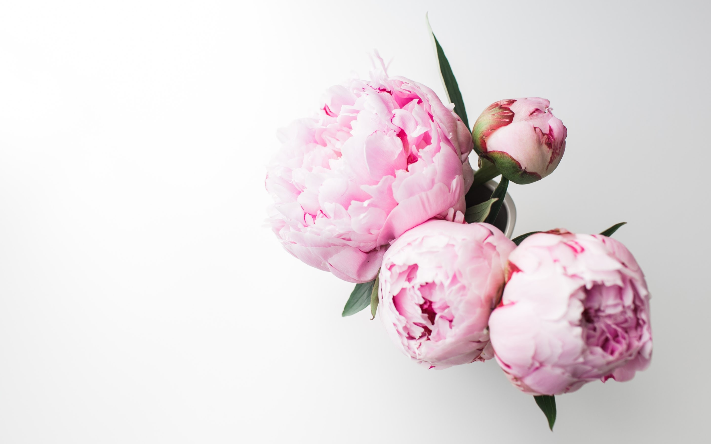 4k hd wallpaper bouquet of peonies a· by andreea with a canon eos 5d mark ii
