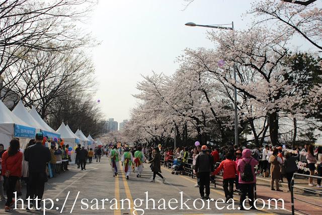 Best Cherry Blossom Spots in Korea
