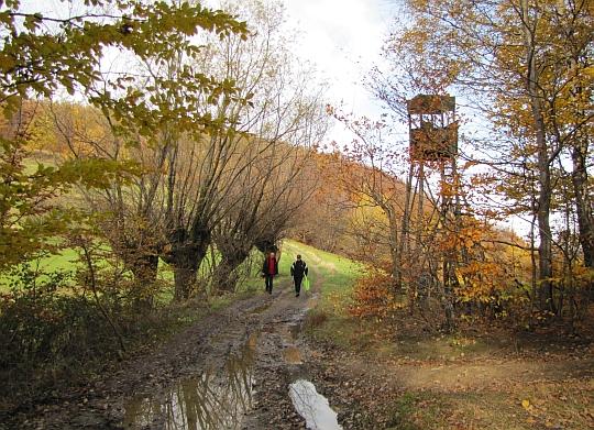 Szpaler wierzb i wieża obserwacyjna na przełęczy pod Grodziskiem.