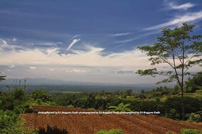 Kebun hortikultur di lereng bukit dengan background Kota Tasikmalaya