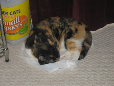 calico cat sleeping on a plastic bag