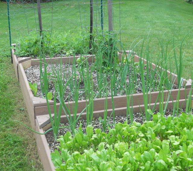 A spring vegetable garden