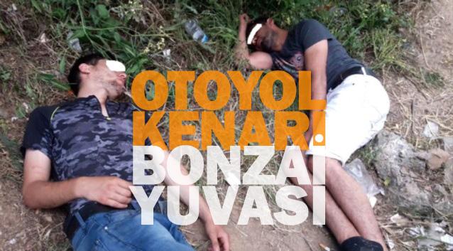 Bonzai kullanan gençlerin içler acısı hali! [ViDEO]