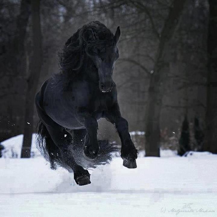 Caballo negro precioso corriendo