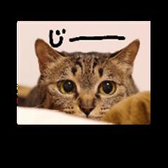 Stickerofcat