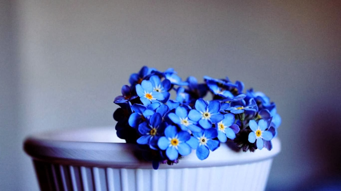 Beautiful Flower Wallpaper full HD Blue for Desktop