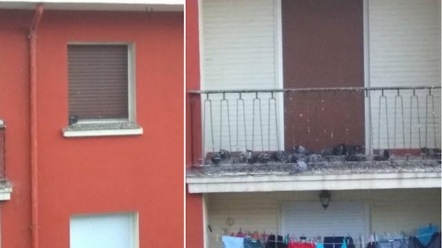 Suciedad de las palomas en una vivienda en Beurko