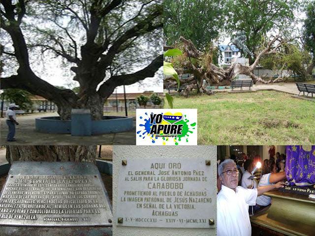 APURE: Antiguo árbol el Tamarindo donde Páez y sus lanceros amarraban sus caballos en cuartel de Achaguas. HISTORIA.
