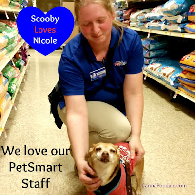 Smiling #Chihuahua with @Petsmart team leader