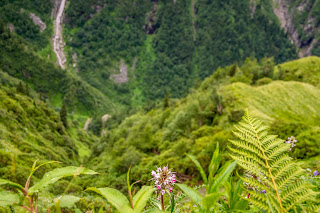 A random flower in the valley of Flowers