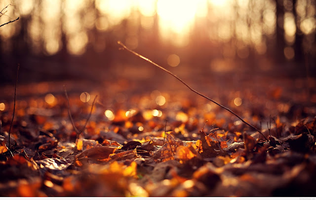 Storymatologi- Angin, Daun dan Pohon
