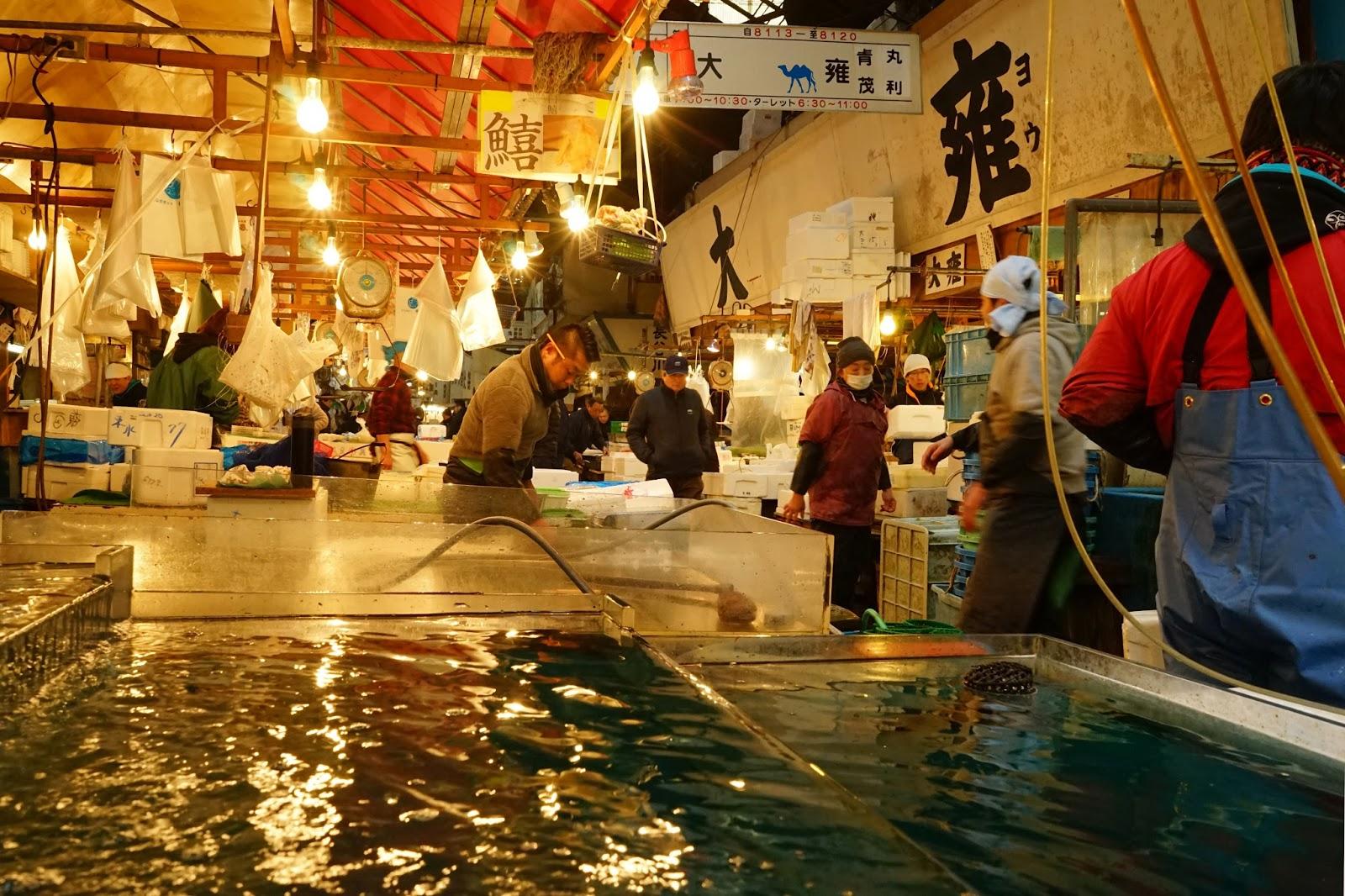 Le Chameau Bleu - Poissonnier de Tsukiji - Tokyo Japon