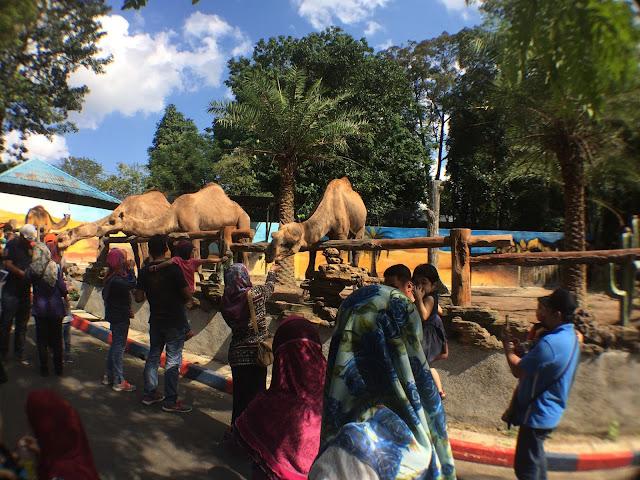 Zoo Johor Unta