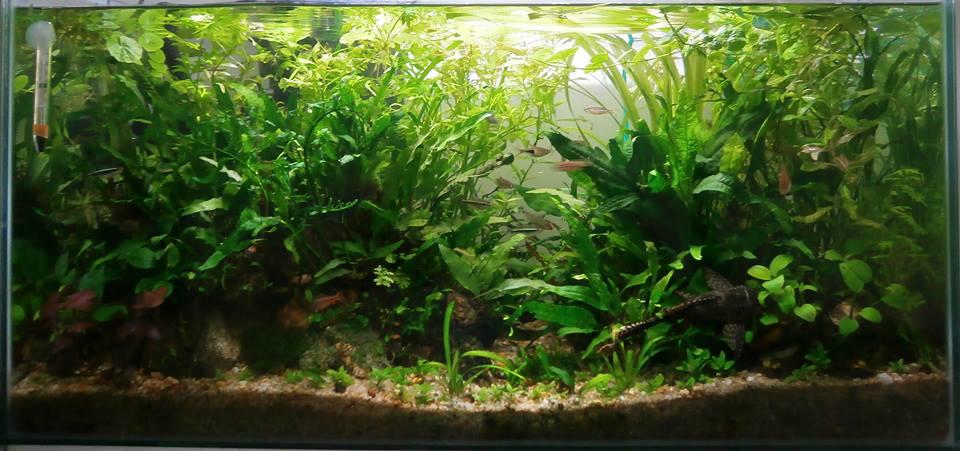 Semi Aquatic Plants Sale